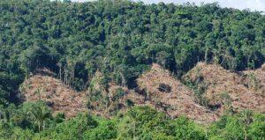 43570 1 300x159 - ¿Influyen los cultivos ilícitos en la deforestación de Colombia?
