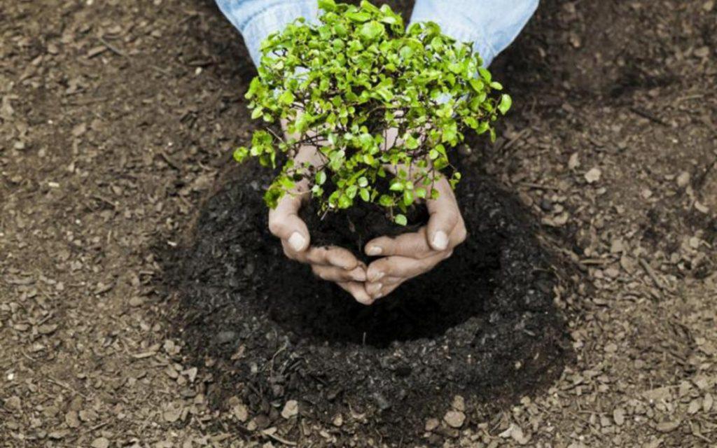 Noticias de Marzo 16 1080x675 1024x640 - Expertos proponen conservar el 30% del planeta, para 2030, a fin  enfrentar la crisis climática.