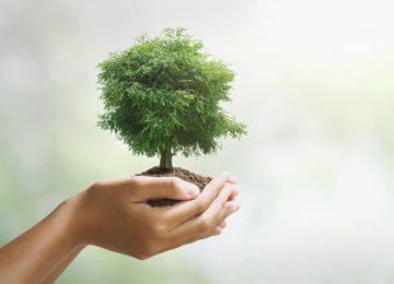 arbol grande holdig que crece fondo verde concepto eco tierra dia 34152 1801 360x260 - Cuidemos la naturaleza porque puede hacer milagros contra el cambio climático//Foto:Freepik.com