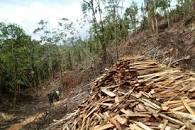 descarga 1 1 - ¿Influyen los cultivos ilícitos en la deforestación de Colombia?