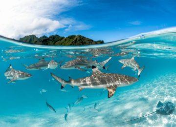 sanctuarysantuario 9b946c26 1200x801 360x260 - 5 especies de tiburones amenazadas en Colombia