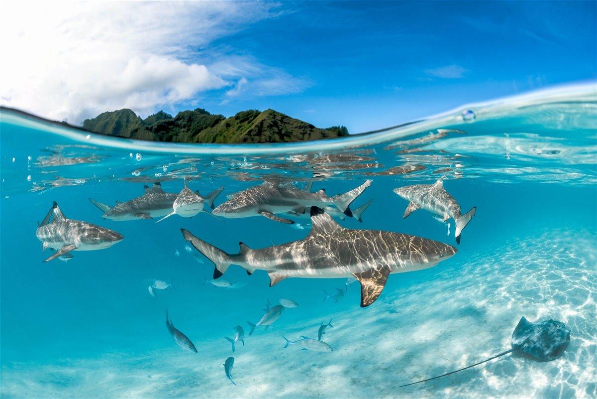sanctuarysantuario 9b946c26 1200x801 - 5 especies de tiburones amenazadas en Colombia