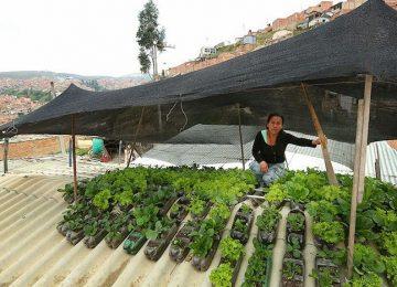Techoverde3 360x260 - Colombia: proponen crear huertos urbanos en los techos de las viviendas humildes