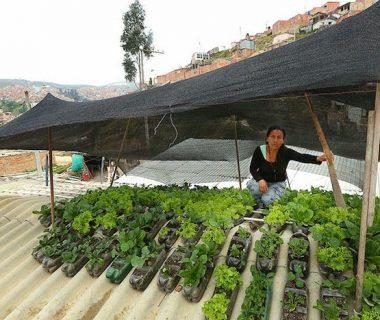 Techoverde3 380x320 - Colombia: proponen crear huertos urbanos en los techos de las viviendas humildes
