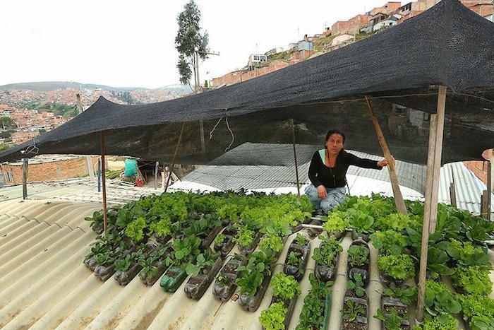 Techoverde3 - Colombia: proponen crear huertos urbanos en los techos de las viviendas humildes