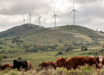 """5ab9a2d15988e 360x260 - Uruguay lidera en el mundo el proceso de """"energía verde"""""""