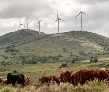 """5ab9a2d15988e 380x320 - Uruguay lidera en el mundo el proceso de """"energía verde"""""""