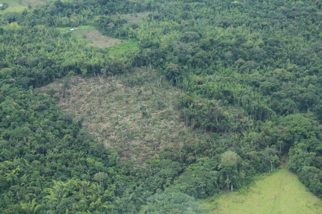 42977 1 1024x683 - Con acción popular buscan frenar la deforestación en la Amazonia colombiana