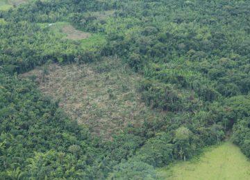 42977 1 360x260 - Con acción popular buscan frenar la deforestación en la Amazonia colombiana