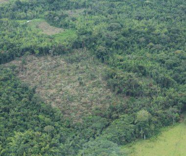 42977 1 380x320 - Con acción popular buscan frenar la deforestación en la Amazonia colombiana