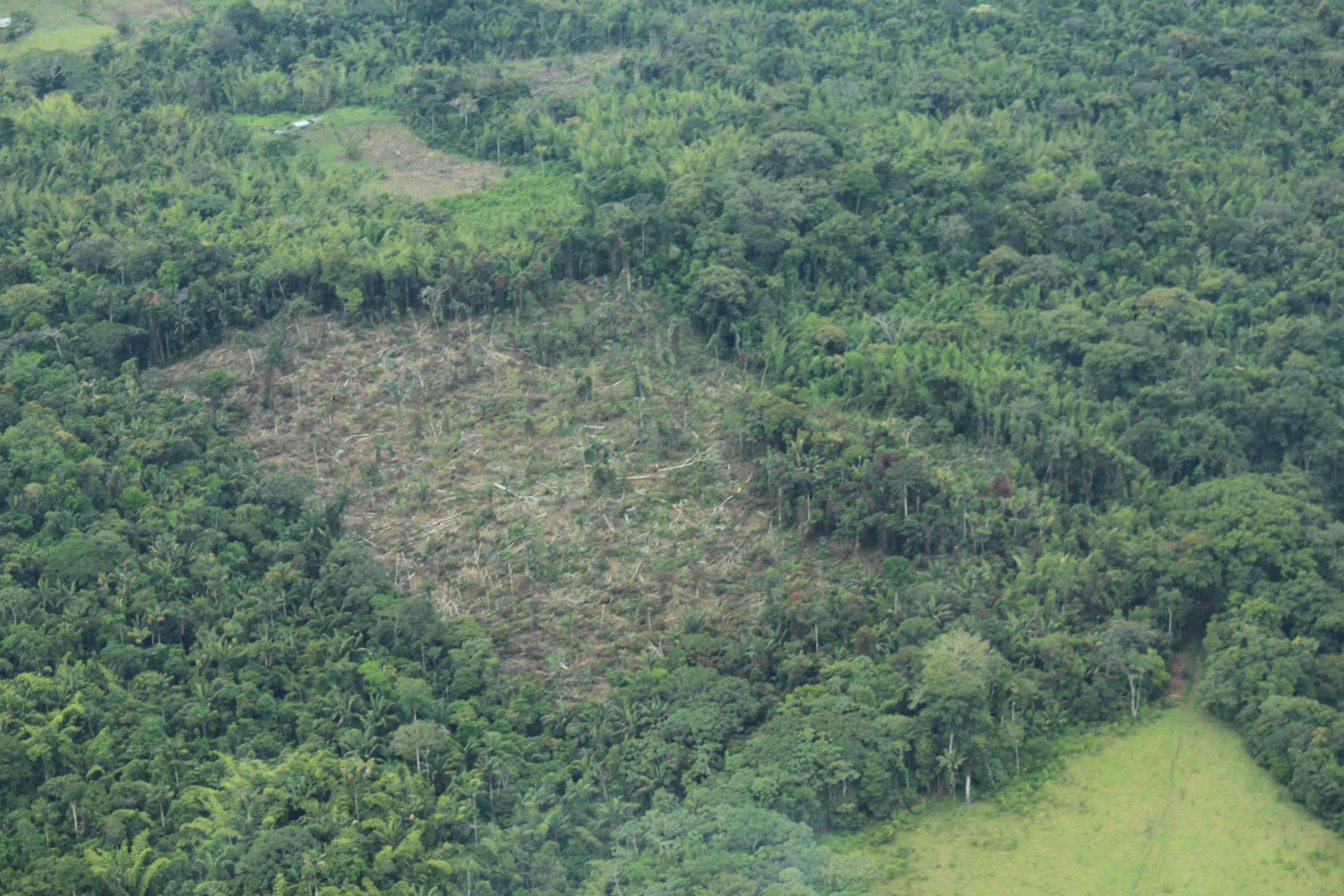 42977 1 - Con acción popular buscan frenar la deforestación en la Amazonia colombiana