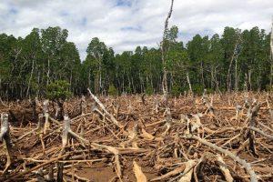 madagascar deforestation 300x200 - ¡URGENTE! Debemos declarar emergencia climática en Colombia AHORA