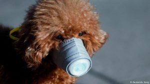 52397772 303 300x169 - Covid-19: ¿Puede el coronavirus afectar a mi mascota?