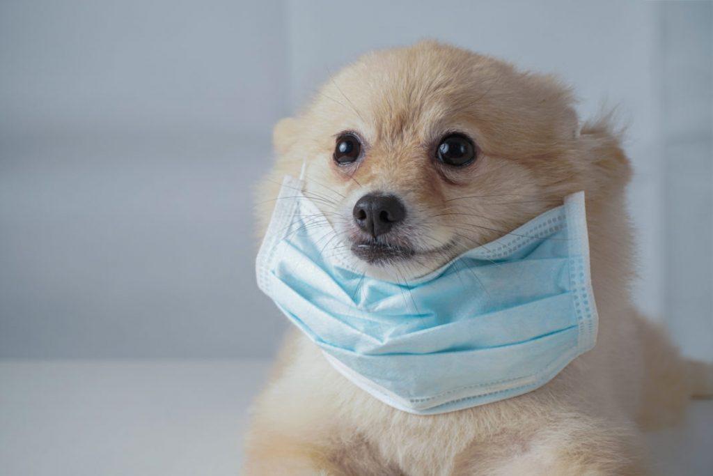 GettyImages 1209791344 1068x712 1024x683 - Covid-19: ¿Puede el coronavirus afectar a mi mascota?