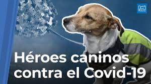 descarga 5 300x168 - Covid-19: ¿Puede el coronavirus afectar a mi mascota?