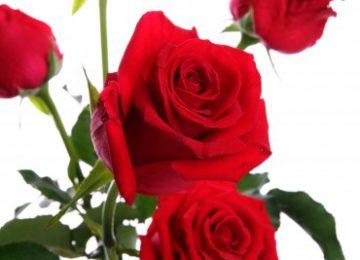 flores a domicilio para el dia de la madre 360x260 - Notisuper anticipó la celebración global del Día de la Madre.