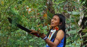 2 ZHCIndigenouspeoples 620x338 1 300x164 - Colombia, Brasil y México encabezan la lista negra de asesinatos de ecologistas