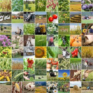 collage de la agricultura del cultivo y productos 117235854 300x300 - Colombia dispone de valiosos recursos humanos y naturales que pueden hacer milagros en manos de un verdadero estadista.