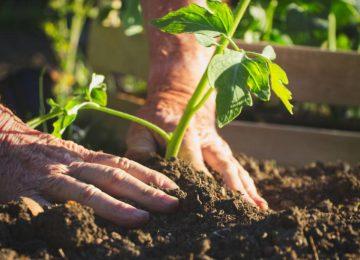1597573112 998189 1597573463 noticia normal recorte1 360x260 - Gobierno departamental entregará insumos y semillas a cerca de 10.000 pequeños productores cundinamarqueses