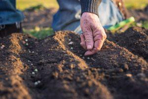 1597573112 998189 1597576117 sumario normal 300x200 - Gobierno departamental entregará insumos y semillas a cerca de 10.000 pequeños productores cundinamarqueses