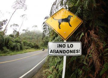 5c0710e7 0051 48e0 ad9d 7da74221ffaf 360x260 - Cundinamarca cierra filas en torno a la protección y cuidado de los animales de compañía.