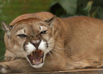 934f94b6 9069 4b62 bbc9 b08115bd41d4 360x260 - Más de 700 millones se invierten para alimentación de la fauna silvestre de los zoológicos de Cundinamarca//YouTube//Tour Virtual.