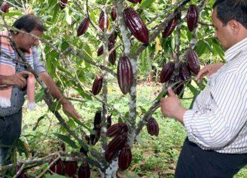 1602002008 360x260 - Primera Feria Virtual de Cacaoteros para incentivar la recuperación económica de Cundinamarca.