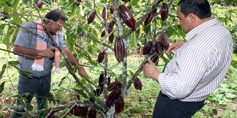 1602002008 - Primera Feria Virtual de Cacaoteros para incentivar la recuperación económica de Cundinamarca.