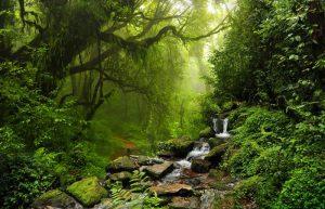 estamos de celebracion por el dia de los parques nacionales naturales de colombia 683641 300x193 - Cuidado con los parques naturales