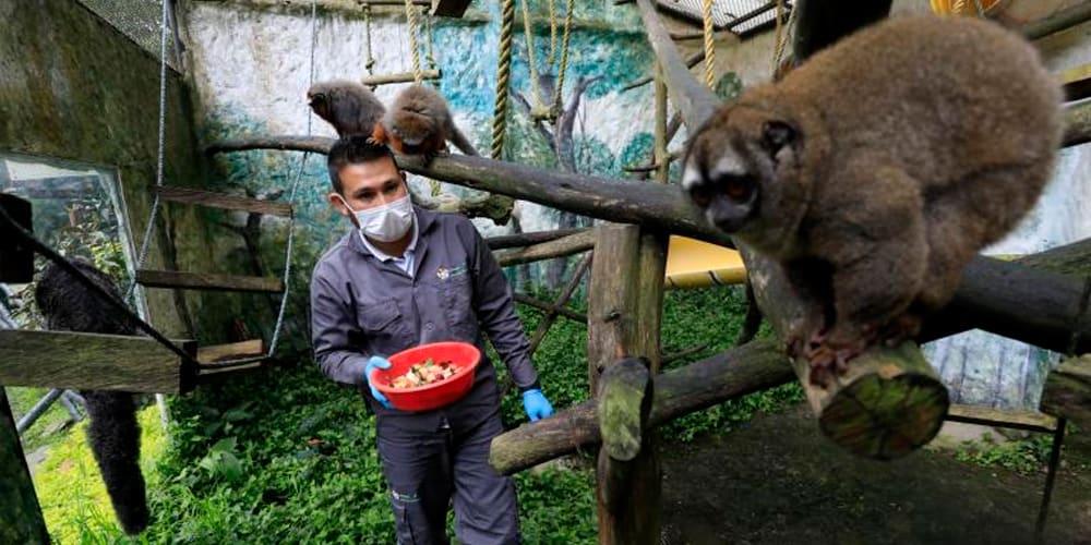 santa cruz min - 79 toneladas de alimentos para la fauna silvestre de bioparques y zoológicos de la región