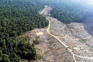 deforestacion 1 300x200 - Las presiones detrás del desastre ambiental que vive la Amazonia.