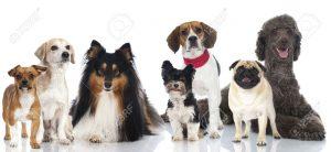 17246261 grupo de perros de razas de pedigrí y mixtos 300x138 - Pet Tech: el millonario negocio de la tecnología para mascotas