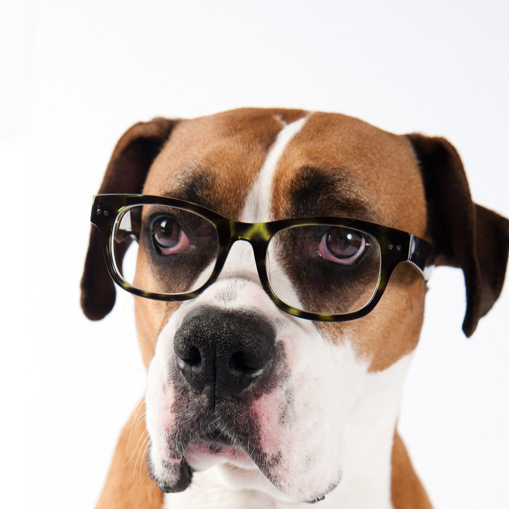 ae20c6d672fe3d798a3fd357c2c795d8 1024x1024 - Pet Tech: el millonario negocio de la tecnología para mascotas