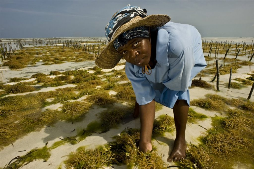 sea weed cultivation 5c8ad1e2 1200x799 1024x682 - Todo por el clima