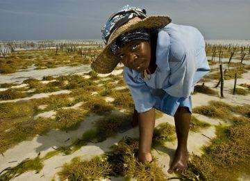 sea weed cultivation 5c8ad1e2 1200x799 360x260 - Todo por el clima