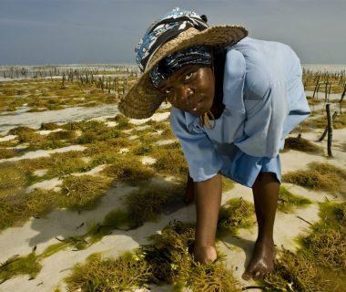 sea weed cultivation 5c8ad1e2 1200x799 380x320 - Todo por el clima